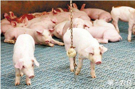 猪场常见的呼吸道疾病以及防治措施