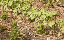 <b>国际农业新动态:印度也开始禁用草甘膦了!</b>