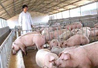 <b>这些非洲猪瘟的预防方法都可行吗?</b>