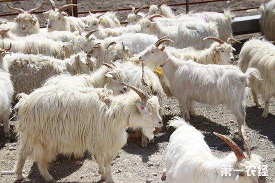 辽宁省出台保险政策支持特色养殖业发展