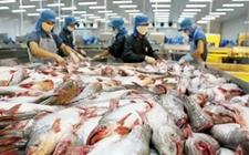 越南巴沙鱼出口量猛增,农民或加大养殖力度