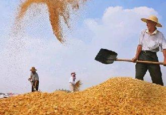 山东聊城:落实农业补贴政策,支持农业发展