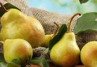 鸭梨要怎么种?鸭梨的种植技术