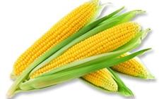 重塑玉米产业健康生态,种植、澳门永利娱乐网址、收贮三方共享产业红利