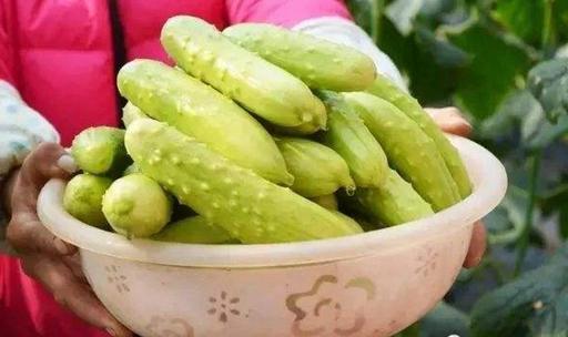 白黄瓜要怎么种?白黄瓜的种植技术