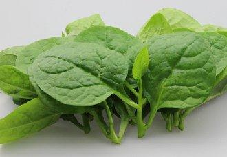 木耳菜要怎么催芽?木耳菜的催芽技术