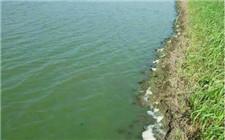 鱼塘夏季肥水技巧:如何增加池水的肥力