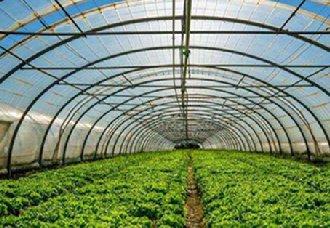 <b>俄罗斯大棚蔬菜产量增加 市场规模增长10%</b>