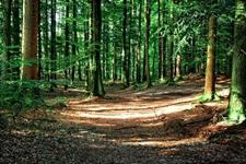乌鲁木齐自治区提前下达中央2019年度林业资金