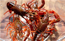 如何提高小龙虾养殖效益?几种小龙虾养殖模式介绍