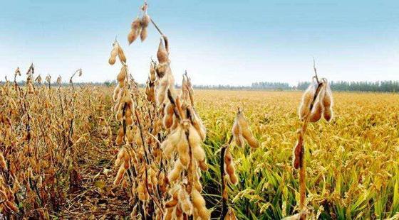 我国今年春耕将调整种植结构 扩大大豆以及油料的生产
