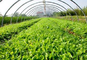 <b>河北唐山蔬菜总产量位居全省首位 去年总产量达到941.6万吨</b>