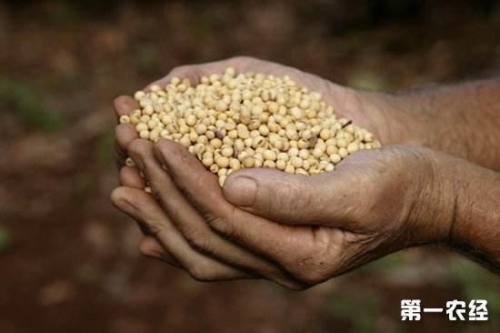 2020年国家将储备1000万公斤种子用于救灾备荒