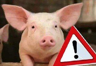 <b>越南北部突发非洲猪瘟疫情 当地养猪户将要接收大规模检查</b>