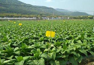 <b>云南宣威市将推广绿色防控技术 有效促进绿色农业的发展</b>