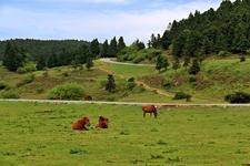国家林业和草原局审批77个国家级森林公园规划指标