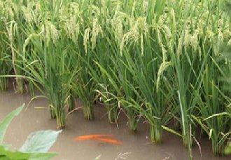<b>安徽桐城市力争2019年稻渔综合种养总面积突破4万亩</b>