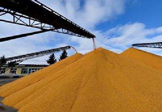 我国将开展2019年政策性粮食库存大清查工作