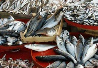 <b>肯尼亚市场鱼类短缺 该国政府取消进口中国鱼类的禁令</b>