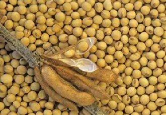 大豆要怎么施肥?大豆的施肥技术与施肥时间