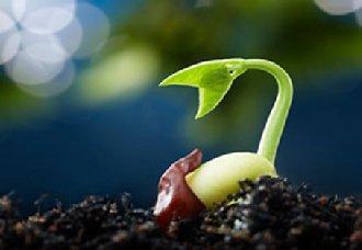 我国2020年国家救灾备荒种子储备总量达5000万公斤