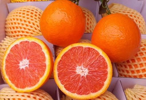 四川高山村40万斤血橙销售遇难 获服务区人员帮助