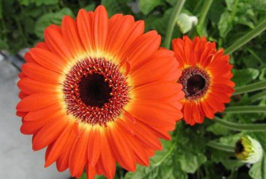 自己种花卖花,她走上了一条开满鲜花的幸福大道