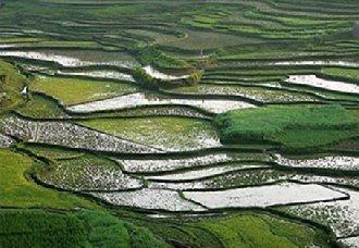浙江宁波今年的粮食播种面积达200万亩左右