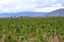 """西藏积极挖掘林业""""生态红利"""" 30万农牧民成为""""林业卫士"""""""