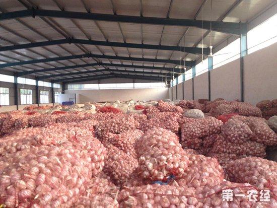 金乡大蒜价格持续上涨 未来一周走势将如何呢?