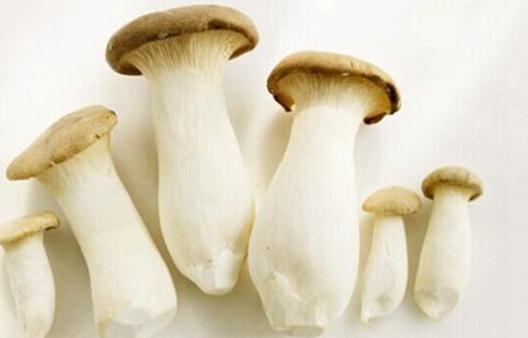 """丰收的雪茸菇是带领他们走上脱贫之路的""""金菇菇"""""""