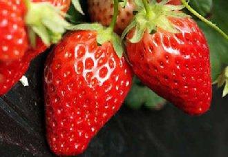 <b>美国科学家报告出将近完整的草莓参照基因组</b>