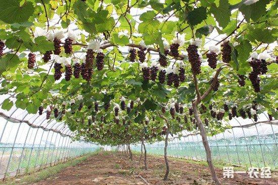 浙江慈溪现代农业产业园 创造高质量农业发展模式