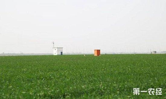 河南省拨款128.1亿元 助力春耕工作