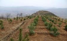 湖南怀化:靖州先严格种苗执法 为全县春季造林护航