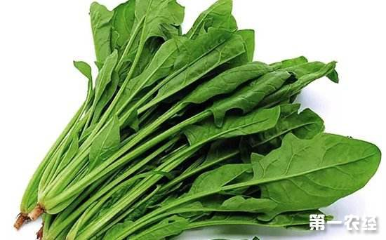甘肃武山市场:2月22日至28日蔬菜价格行情
