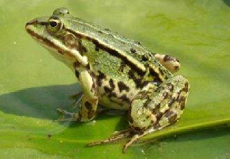 <b>池里养青蛙水面种水葫芦,贫困村民脱贫又致富</b>