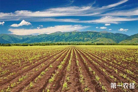 """我国蔬菜半数是""""洋种子""""长成 国产种业亟待突破"""