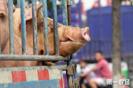 """保持""""零容忍""""的态度,严厉打击涉非洲猪瘟相关犯罪"""