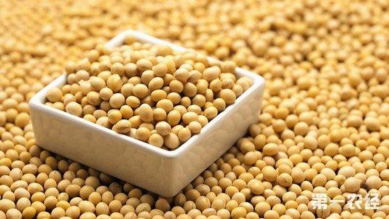 中国恢复进口美国大豆 今后大豆市场走向如何?