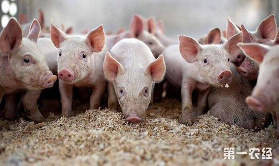 生猪价格持续上涨?可能有哪些风险?