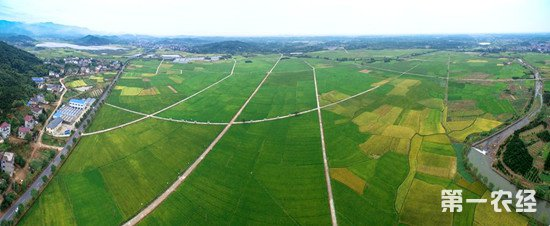 人大代表建议:对粮食主产区采取更多政策扶持