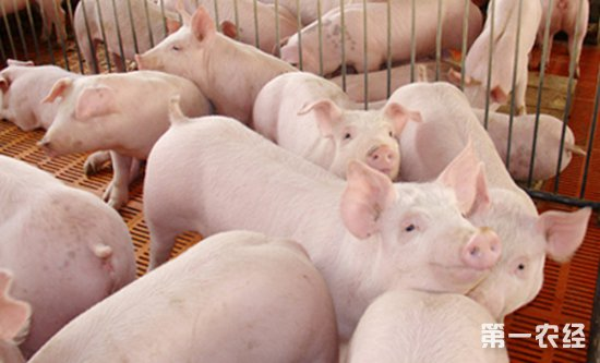 猪价上涨,国家启动20万吨的中央储备冻猪肉计划