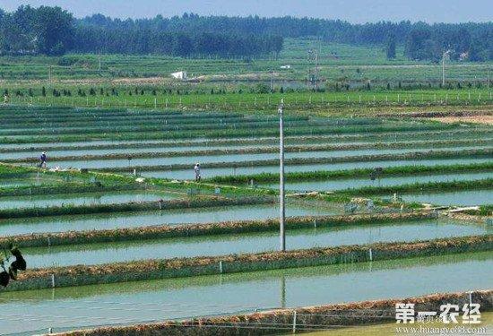 苏陕协作首个泥鳅养殖扶贫项目正式投苗