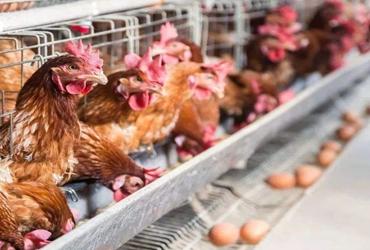沈阳鸡蛋价格跌进3元区 比部分蔬菜品种还便宜