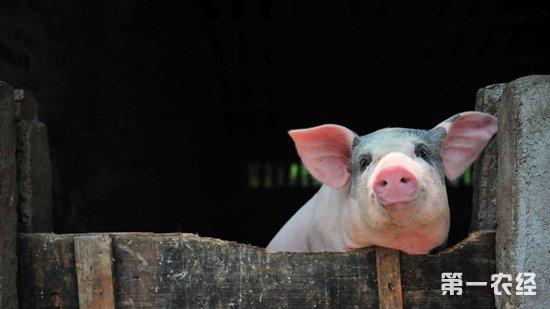 铁丝制作立体小动物猪