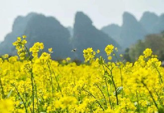 重庆农科院培育出五彩油菜,好看又多出油