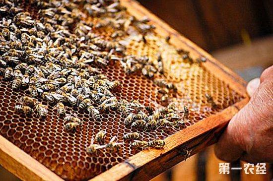 养蜂过程中要如何防护螟虫的危害?