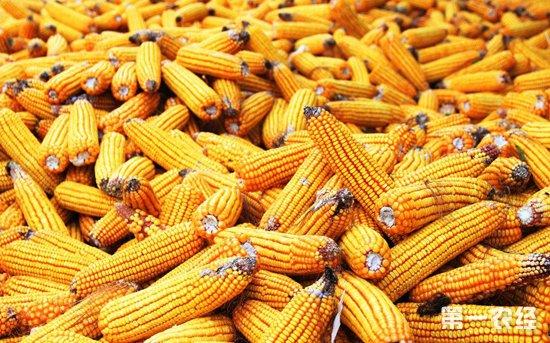 2019年中国玉米市场行情预测:存在利好