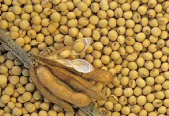 <b>黑龙江将继续实行大豆生产者补贴 每亩可补贴300元左右</b>